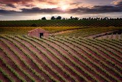 Champs des vignobles au coucher du soleil dans Cariñena, ³ n, Espagne d'Aragà Photos libres de droits
