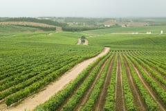 Champs des vignobles de raisin chez Quintas DA Vassala Vala Nova Vineyard dans la campagne du Portugal Images libres de droits