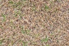Champs du blé à la fin de l'été bien mûre, herbe sèche comme fond Image libre de droits