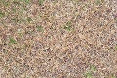 Champs du blé à la fin de l'été bien mûre, herbe sèche comme fond Photos libres de droits