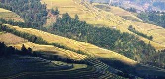 Champs en terrasse de Longji dans Guiling Images libres de droits