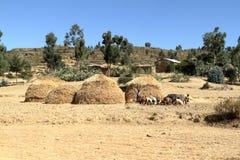 Champs et fermes de grain en Ethiopie images libres de droits