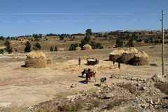 Champs et fermes de grain en Ethiopie photo stock