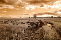 champs et forêts de campagne Image infrarouge Image stock