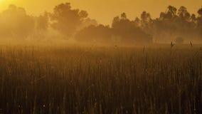 Champs et lever de soleil photographie stock