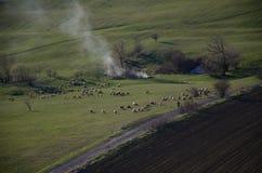 Champs et moutons verts dans Transilvania Photos libres de droits
