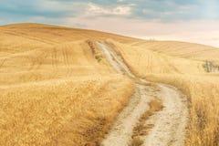 Champs et paix dans le soleil chaud de la Toscane, Italie Photographie stock libre de droits