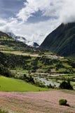 Champs fleurissants du Népal Images stock