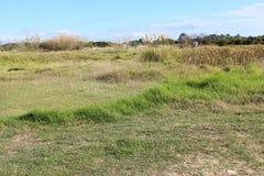 Champs herbeux à l'Australie occidentale de Bunbury de grand marais Images libres de droits