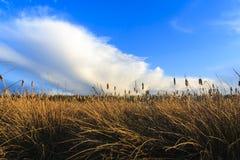 Champs herbeux avec des nuages Photos libres de droits