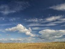 Champs jaunes sous un ciel bleu dramatique avec les nuages blancs voisins la colonie du grec ancien de Histria, sur les rivages d Photographie stock libre de droits