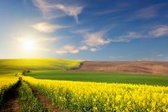Champs jaunes, verts, bruns et route moulue donnant sur une vallée Images libres de droits