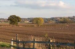 Champs labourés dans la campagne d'Essex en automne Photographie stock