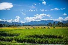Champs agricoles en Indonésie images stock