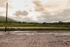Champs qui commencent à s'élever dans la saison des pluies photo stock