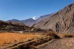 Champs ruraux, Népal Photos libres de droits