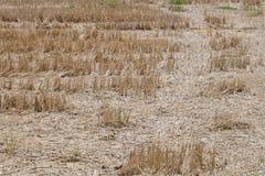 Champs secs de ferme Photos libres de droits