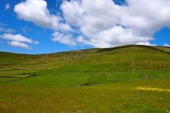 Champs verts avec le ciel nuageux bleu Image stock