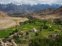Champs verts d'orge de montagne dans le village tibétain, étirés parmi les crêtes élevées et les gammes de montagne, Ladakh, Hima Images libres de droits
