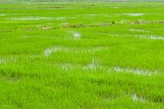 Champs verts dans Pulau Pinang photo stock