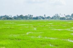 Champs verts dans Pulau Pinang image stock