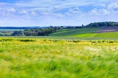 Champs verts de blé, de seigle, de soja et de maïs Ciel bleu avec le cumulus photo stock