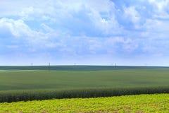 Champs verts de blé, de seigle, de soja et de maïs Ciel bleu avec le cumulus images libres de droits
