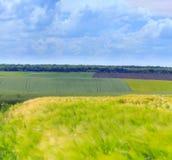 Champs verts de blé, de seigle, de soja et de maïs Ciel bleu avec le cumulus photographie stock libre de droits