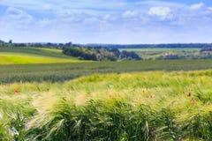 Champs verts de blé, de seigle, de soja et de maïs Ciel bleu avec le cumulus photos libres de droits