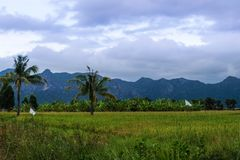 Champs verts en Thaïlande images stock