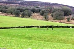 Champs verts et barrières en pierre photos libres de droits