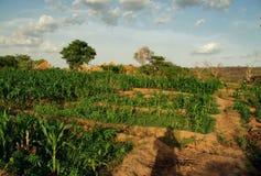 Champs verts idylliques d'une ferme organique dans le sec au nord du Ghana, 2018 images libres de droits