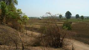 Champs vus d'une colline avec des buissons clips vidéos