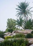 Chan Pha. The ornamental plants on the rocks Royalty Free Stock Photo
