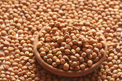 Chana Dal- Chick peas Royalty Free Stock Photos