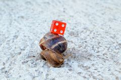 Chance in coming slow. Picture of a red dice on a snail shell royalty free stock images
