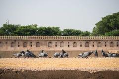 Chand Baori Stepwell nel villaggio di Abhaneri, Ragiastan, Jaipur, INDIA Fotografie Stock