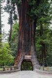 Chandalier drzewa przejażdżka Przez drzewa Zdjęcie Royalty Free