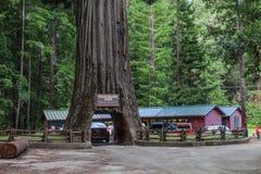 Chandalier drzewa przejażdżka Przez drzewa Obraz Royalty Free