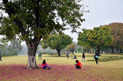 Chandigarh, Índia - 4 de janeiro de 2015: Visita Zakir Hussain Rose Garden do turista Imagem de Stock Royalty Free