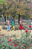 Chandigarh, India - January 4, 2015: Indian people visit Zakir Hussain Rose Garden Royalty Free Stock Photo