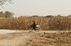 Chaneese farmer on the bicycle royalty free stock photography