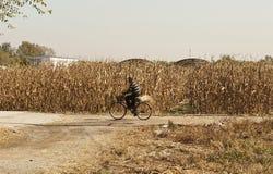 Chaneese-Landwirt auf dem Fahrrad lizenzfreie stockfotografie