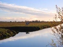 Chanel, arbre, herbe, vache et ciel nuageux, Lithuanie photo libre de droits