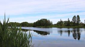 Chanel, cisne e árvores verdes bonitas, Lituânia foto de stock royalty free