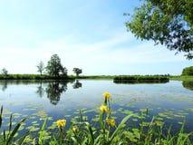 Chanel och härliga gröna träd och blommor, Litauen fotografering för bildbyråer