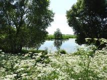 Chanel och härliga gröna träd och blommor, Litauen royaltyfria foton