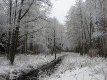 Chanel och härligt snöig träd i skogen, Litauen arkivbilder