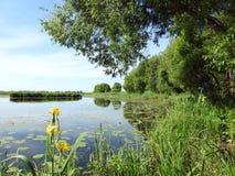 Chanel, piękni zieleni drzewa i kwiaty, Lithuania obrazy stock