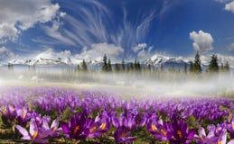Chaînes de montagne de l'Ukraine Photographie stock libre de droits